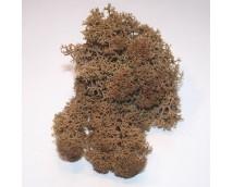 Joefix 120 Basis bruin mos