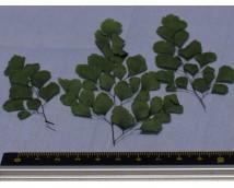 Joefix 125 Grote groene blaadjes