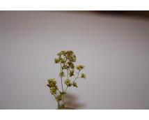Joefix 129 Bloemen/struiken